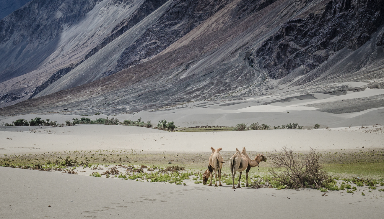 ladakh-4053